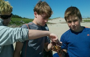 Sparhawk middle school students are on a fieldtrip to Joppa flats and holding crabs by the ocean.