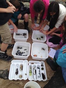 Sparhawk middle school students at Joppa Flats center exploring ocean creatures.